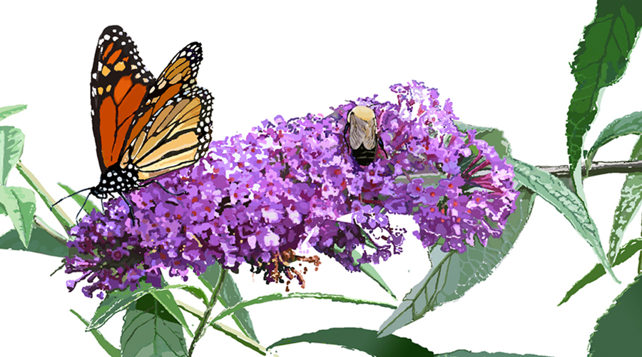Monarch and Bumblebee